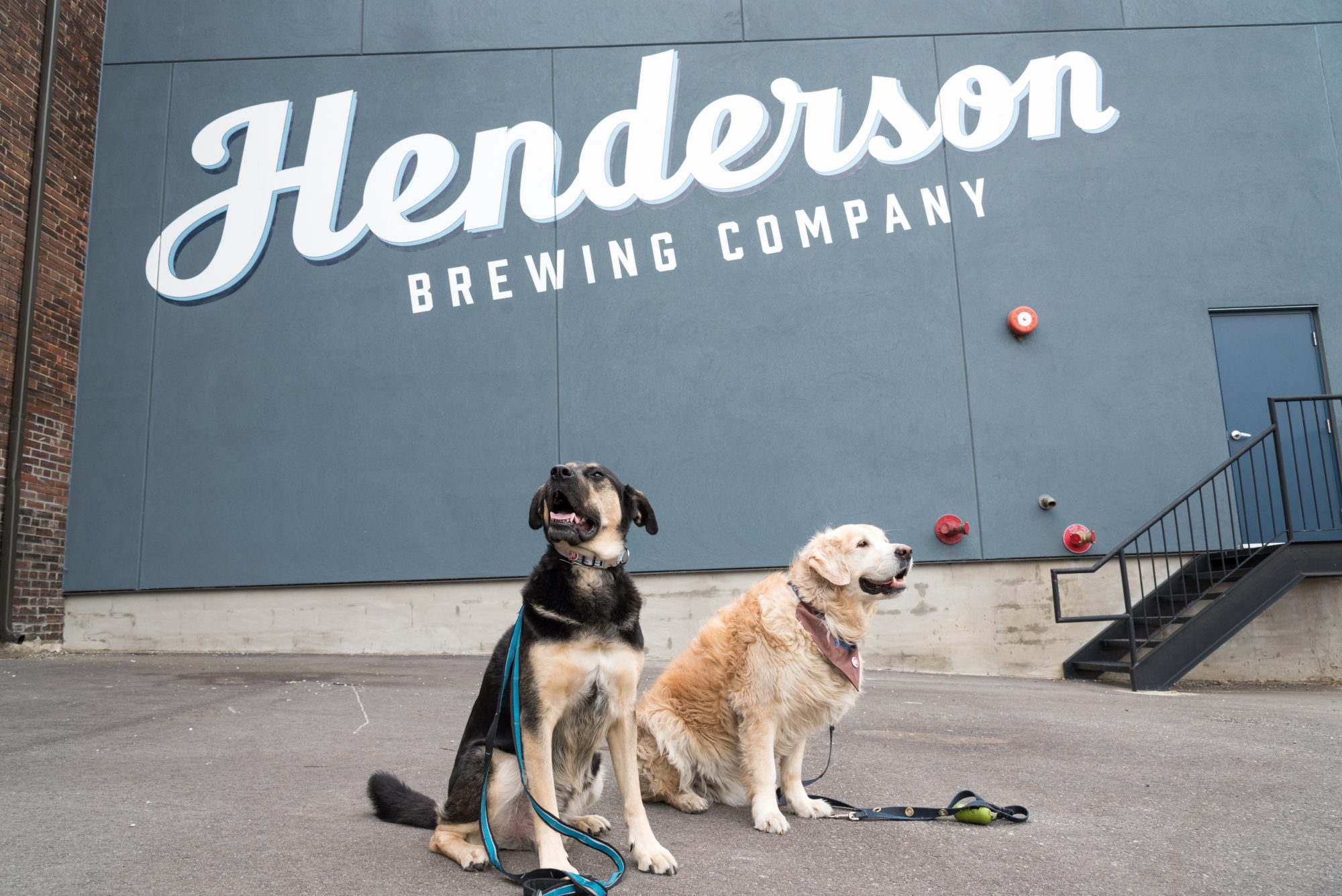 toronto-breweries-dogtoberfest-streeters-henderson-brewing-co-beer-dogs-benny-beauford