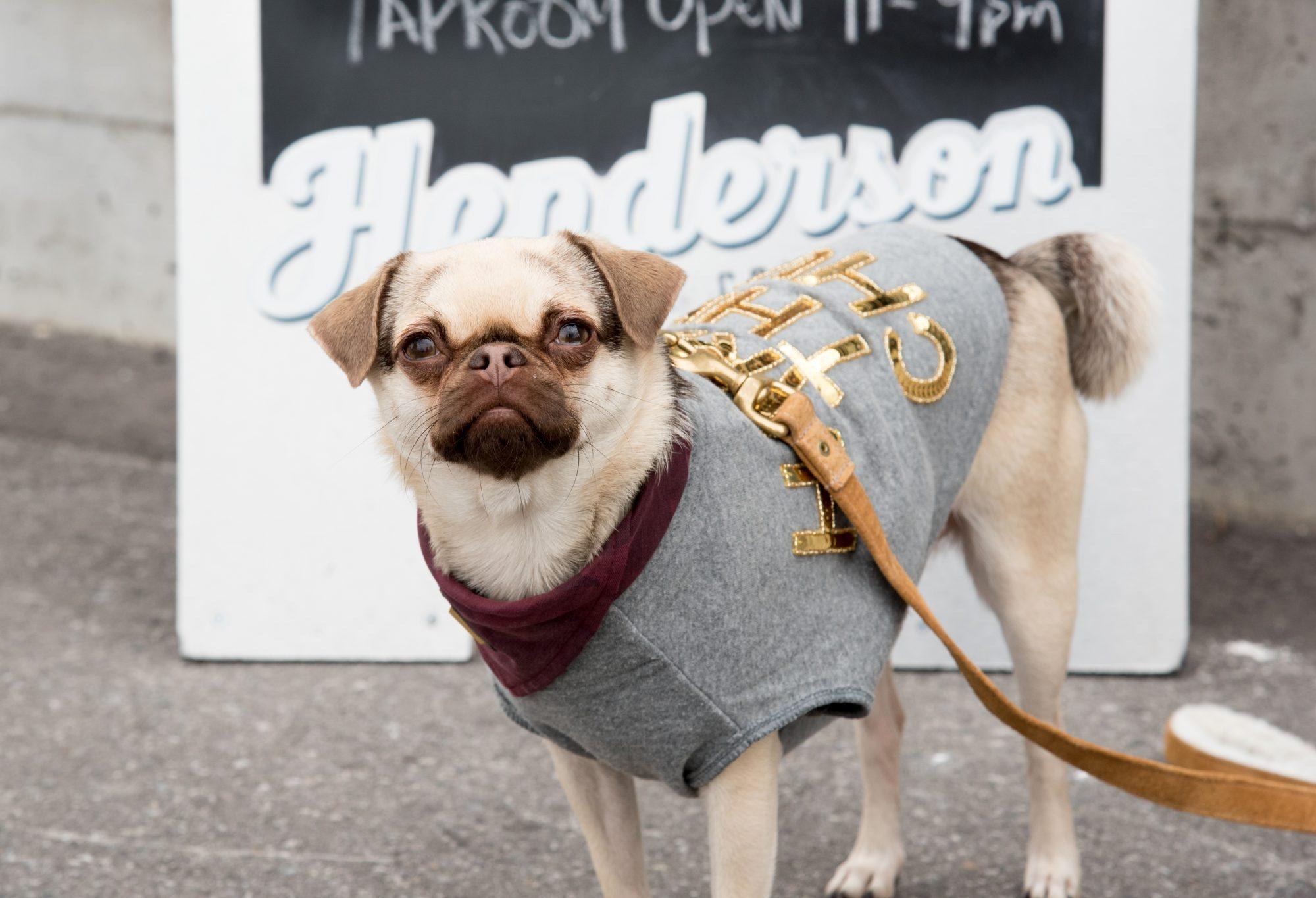 toronto-breweries-dogtoberfest-streeters-henderson-brewing-co-beer-dogs-harley