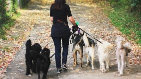 Six Toronto dog walkers tell us what it's like to hang out with other people's pooches