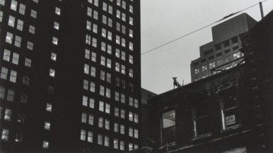 Ten fascinating snapshots of Toronto in the 1970s