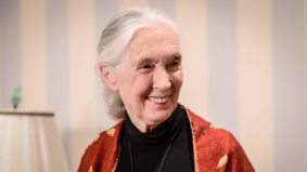 Inside Jane Goodall's 83rd birthday party in Rosedale