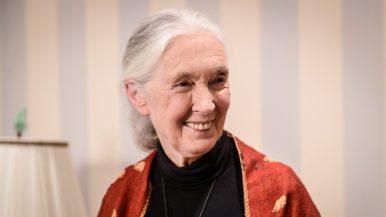 Inside Jane Goodall's 83rd birthday party in Rosedale