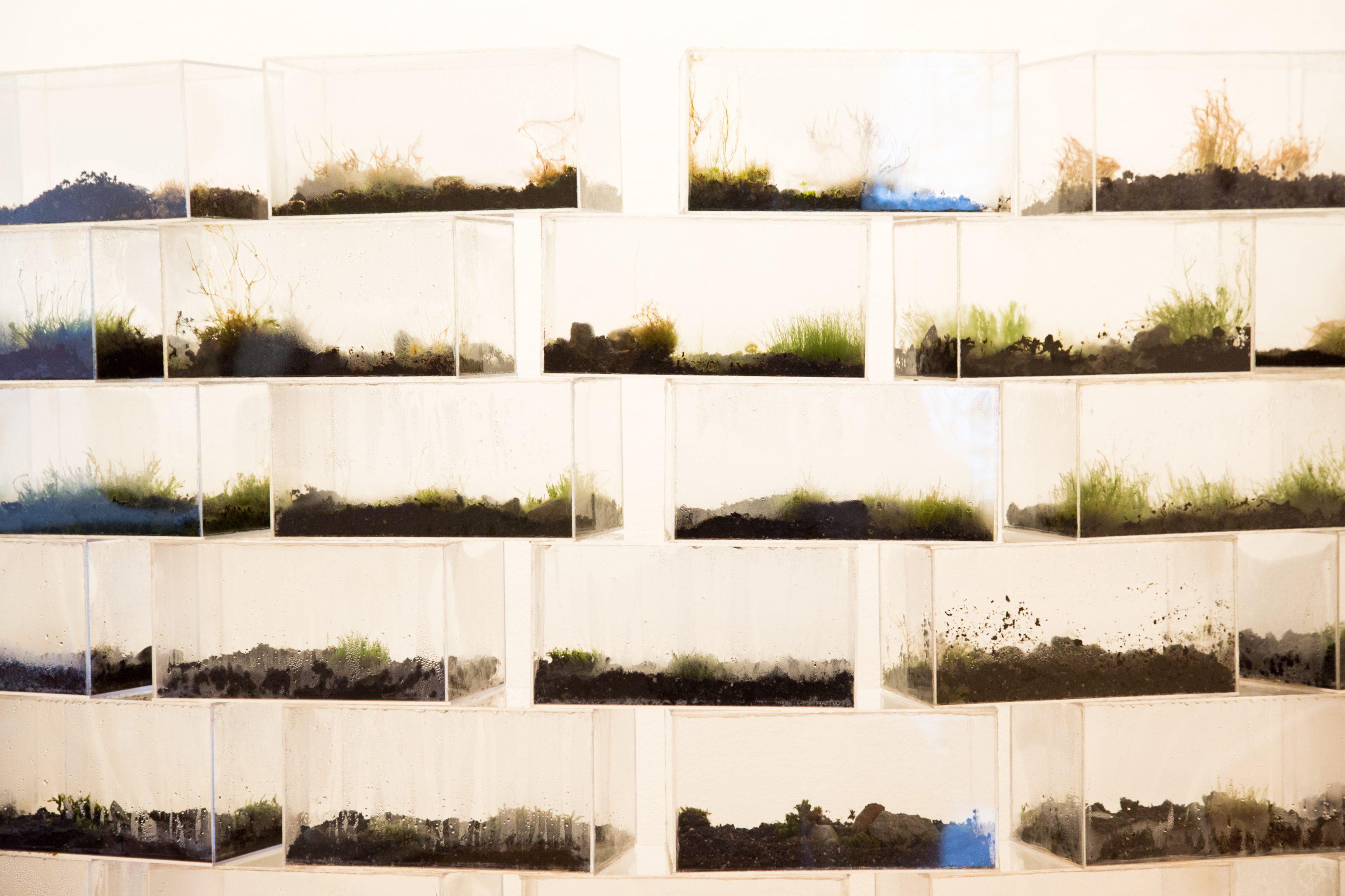toronto-art-the-gladstone-hotel-grow-op-2017-rewilding-melanie-billark