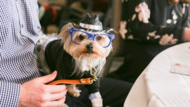 Street Style: Woofstock's high tea service for decked-out dogs