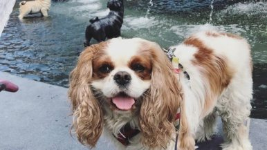 These Toronto pups can't get enough of Berczy Park's new dog fountain