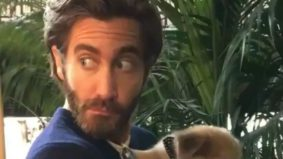 Spotted at TIFF 2017: Jake Gyllenhaal holds a puppy and Roland Møller gets a blister