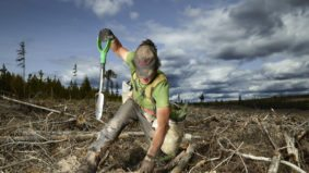 Seven amazing portraits of tree planters working in B.C.'s remote backcountry