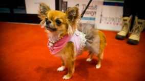 The seven cutest pooches at Toronto's Doggy Oscars
