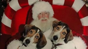 The hottest trend in Santa photos this Christmas: canines