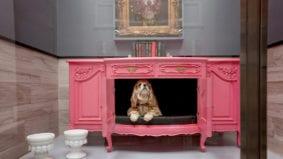 Inside Dog Tales, a swanky pet sanctuary in King City