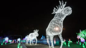 Inside Toronto's new winter festival, with thousands of lights, a skating pond and a 180-foot-long tube slide