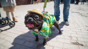 19 dapper dogs dressed in their spring finest