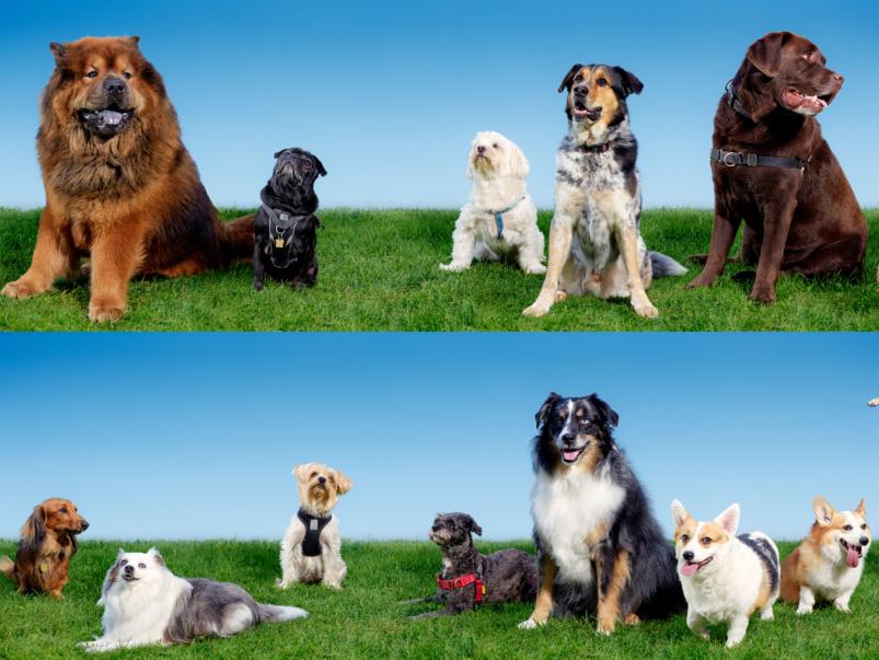 The dogs of condoland