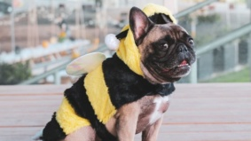 The most outrageous Halloween costumes from Toronto dogs