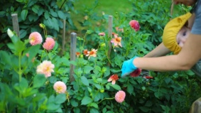 Six gardening shops doing delivery—plus their pandemic planting recommendations