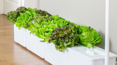 Six indoor hydroponic gardens for growing your own fruits and veggies