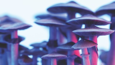 A recent history of therapeutic psychedelics